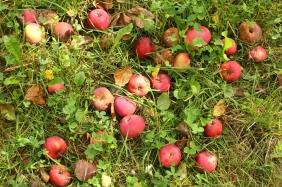 aranjament cu mere si iarba